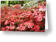 Callaway Gardens Greeting Card