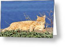 Cat In Hydra Island Greeting Card