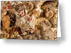 Cheilostomata Bryozoan Greeting Card