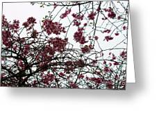 Cherry Blossoms In The Sky Greeting Card