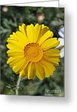 Crown Daisy Flower Greeting Card