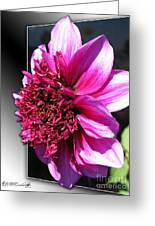 Dahlia Named Blue Bayou Greeting Card