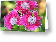 Dianthus Cross Greeting Card