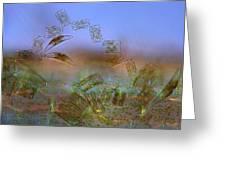 Diatoms, Light Micrograph Greeting Card