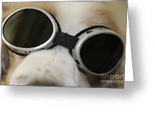 Dog With Sunglasses Greeting Card