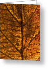 Dogwood Leaf Backlit Greeting Card