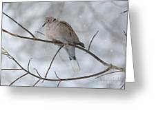 Eurasian Collard Dove Greeting Card