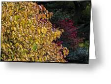 Fall Foliage Greeting Card