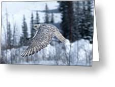 Faucon Gerfaut Falco Rusticolus Greeting Card