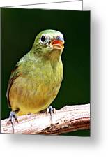 Female Painted Bunting Greeting Card