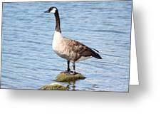 Goose Greeting Card