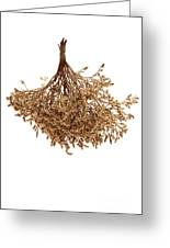 Hanging Dried Flowers Bunch Greeting Card