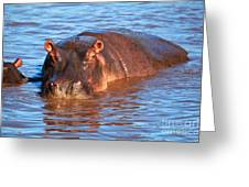 Hippopotamus In River. Serengeti. Tanzania Greeting Card