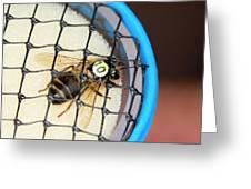 Honeybee Radar Tagging Greeting Card