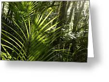 Jungle Light Greeting Card