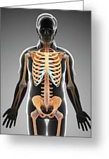 Male Skeletal System Greeting Card
