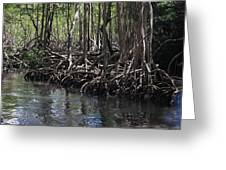 Mangrove Forest In Los Haitises National Park Dominican Republic Greeting Card