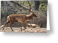 Mesopotamian Fallow Deer  Greeting Card