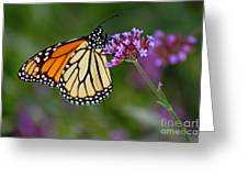 Monarch Butterfly In Garden Greeting Card