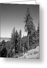 Mountainside Near Lake Tahoe Greeting Card