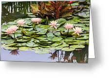 6 Pink Waterlilies Greeting Card