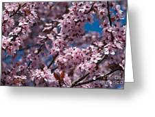 Plum Tree Flowers Greeting Card