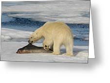 Polar Bear With Fresh Kill Greeting Card