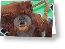 Portrait Of A Large Male Orangutan Greeting Card
