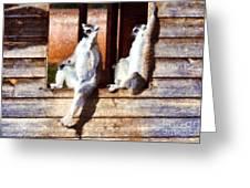 Ring Tailed Lemurs Greeting Card