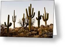 Saguaro Cacti Greeting Card