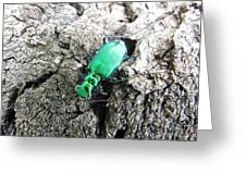 6 Spotted Tiger Beetle Greeting Card