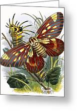 The Butterfly Vivarium Greeting Card