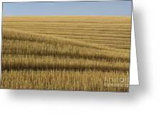 Tracks In Field Greeting Card
