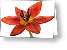 Tulip Greeting Card by Mark Johnson