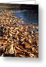 Ussurian Taiga Autumn Greeting Card