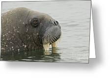 Walrus Greeting Card