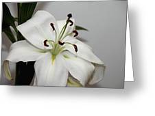 White Lily In Macro Greeting Card
