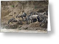 Wildebeests Crossing Mara River, Kenya Greeting Card