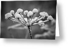 Winter Flowers Greeting Card