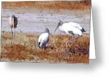 Wood Storks Greeting Card