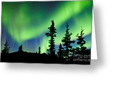 Yukon Taiga Spruce Northern Lights Aurora Borealis Greeting Card