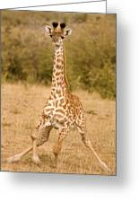6310 Baby Masai Giraffe Getting Up Greeting Card