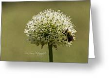 6337a Greeting Card