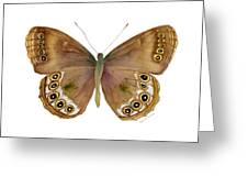 64 Woodland Brown Butterfly Greeting Card by Amy Kirkpatrick