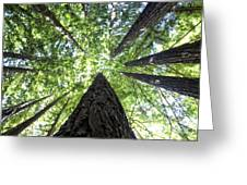 642 Pr A Stand  Of Trees Greeting Card
