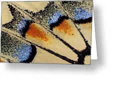Close-up Detail Wing Pattern Greeting Card