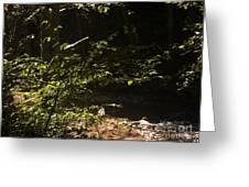 654 Cf Solitary Stream  Greeting Card