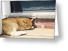 #665 03 Catnap  Greeting Card