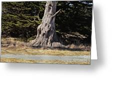 668 Det The Old Tree Greeting Card