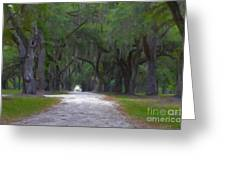 Allee Of Live Oak Tree's Greeting Card